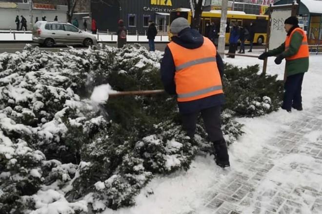 У Дніпровському районі комунальники б'ють дерева і говорять, що рятують