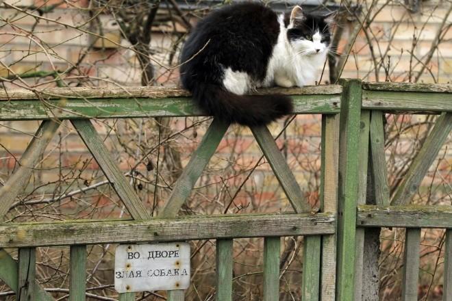 """Біля мерії Ірпеня встановили двоповерховий """"котедж"""" для безпритульних котів"""