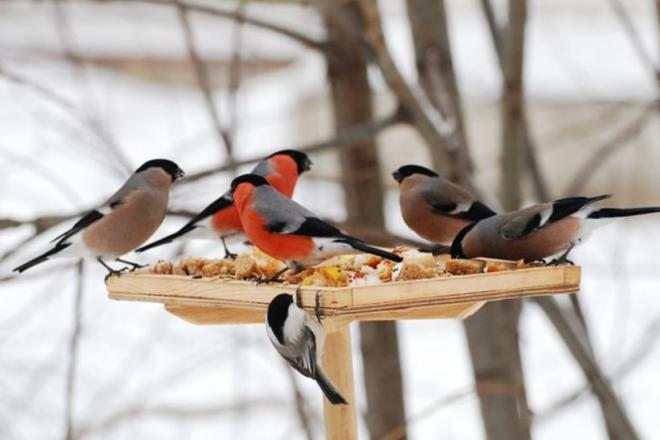 Чим підгодовувати птахів взимку – поради