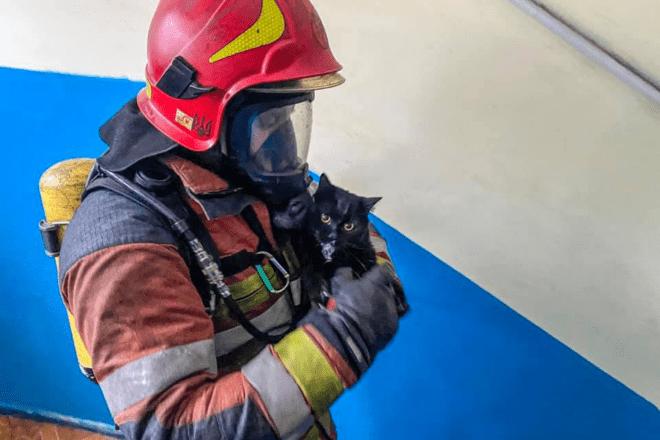 Столичні пожежники врятували кота з палаючої квартири (ФОТО)