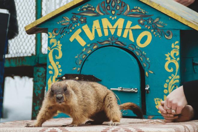 Якою цьогоріч буде весна – прогноз від бабака Тимка