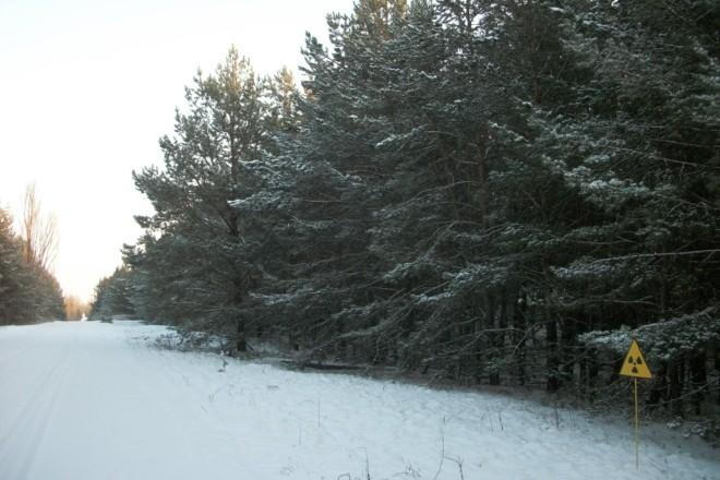 Величний ліс і занедбані кладовища. Вражаючі фото зимового Чорнобилю