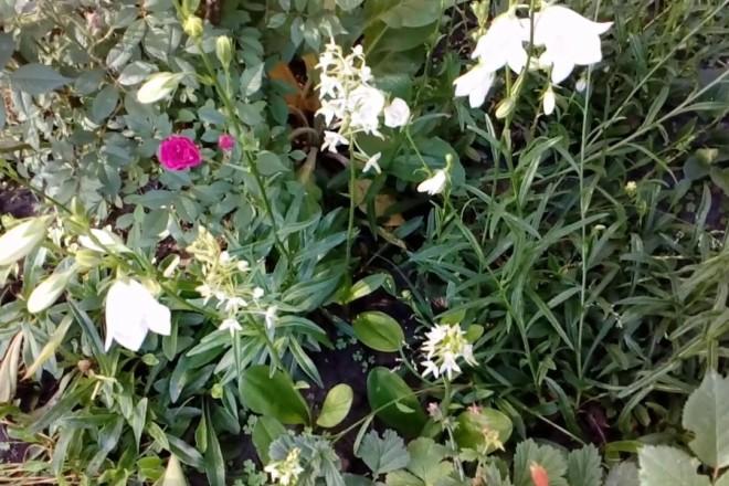 Червонокнижні рослини біля Ірпеню захистять законом