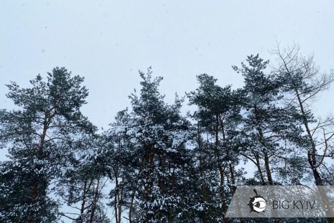 Лісова пісня. Снігова прогулянка серед мальовничих сосен –  ФОТО