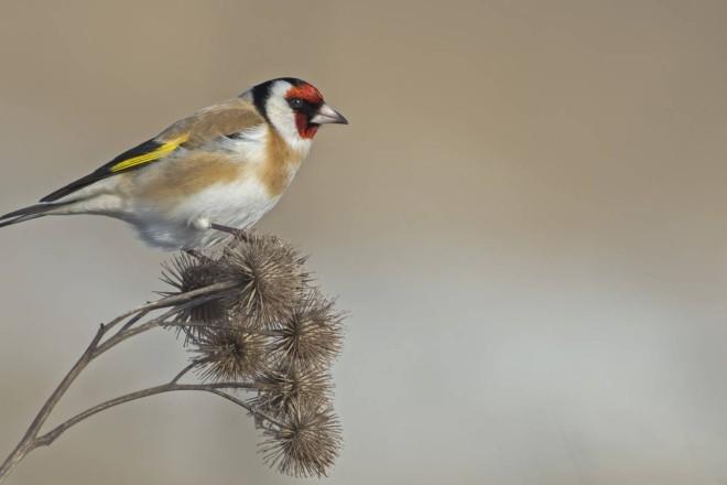 Українських птахів вивозять на паштет. У Києві скликали нараду