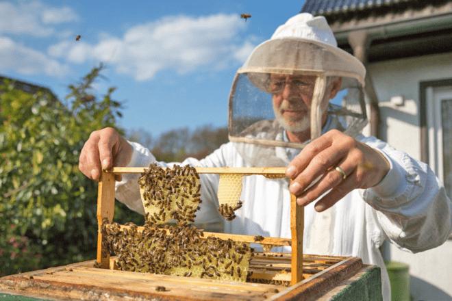 Пасічники тут? Спеціально для бджільників запускають онлайн-семінари