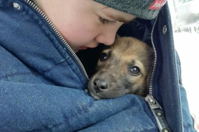 Гроза для живодерів. У Києві з'явиться Центр гуманного поводження з тваринами