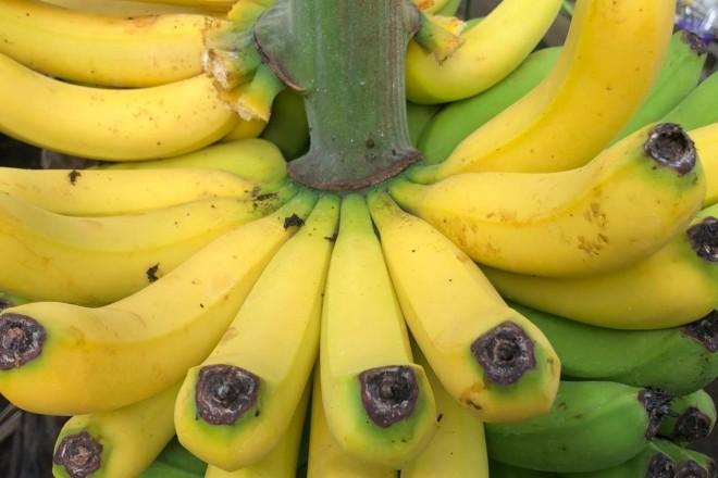 Під Києвом стигнуть банани і цвітуть лимони (ФОТО)