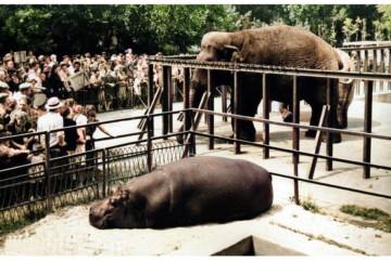 Про роль Хрущова в історії Київського зоопарку і чому одного разу вижило лише 4 тварини із тисячі