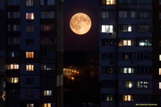 Вночі рожевий супермісяць, вранці іній на квітах – дивовижні фото казкового Києва
