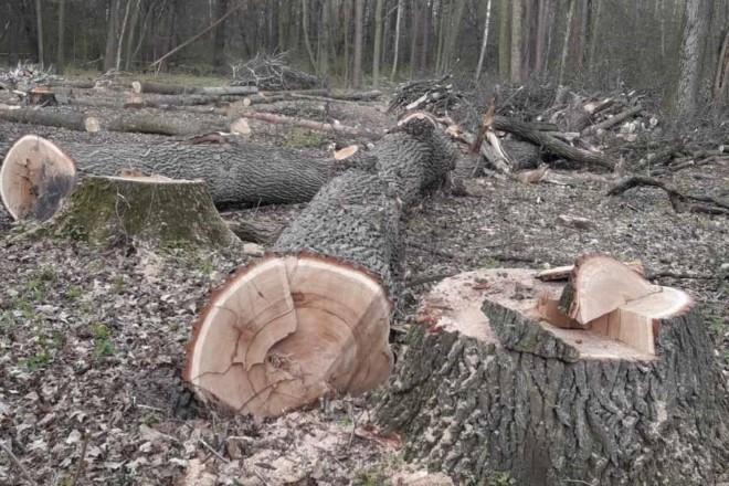 В Пущі-Водиці знову рубають вікові дуби під забудову