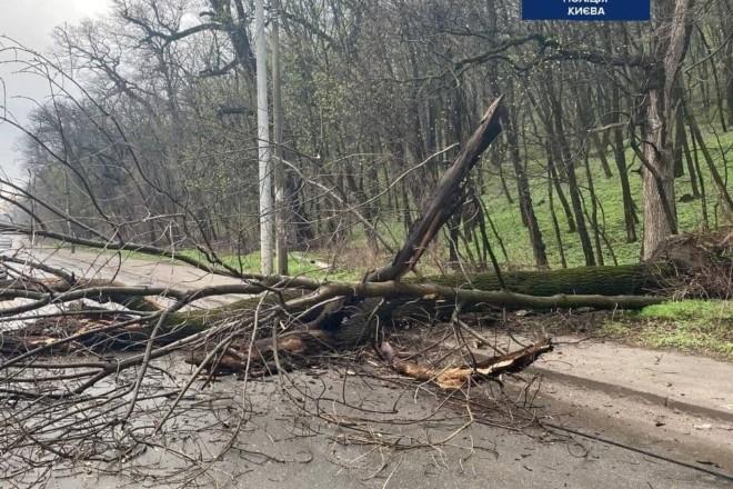 У Голосієві на дорогу впало дерево і заблокувало рух транспорту