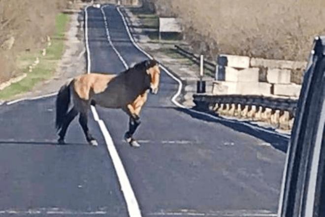 Несподівана зустріч: кінь Пржевальського прямо посеред дороги (ФОТО)