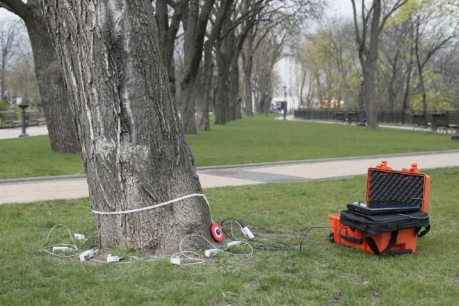Технології в Києві: дерева обстежуватимуть за допомогою томографа