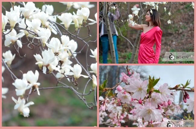 Магнолії, сакури та киянки: весняна краса у ботсаду Фоміна (ФОТОРЕПОРТАЖ)