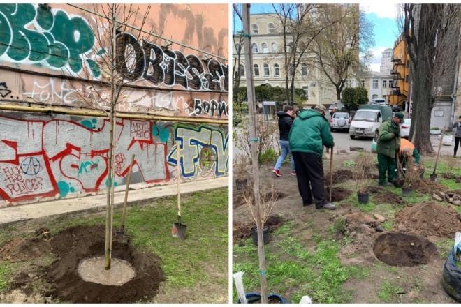 На місці знищеної на Січових Стрільців магнолії, висадили нові дерева (ФОТО)