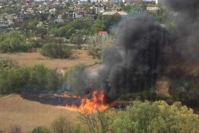 Черепашки та каченята у вогні – на Совських ставках пожежа наробила лиха (ФОТО)