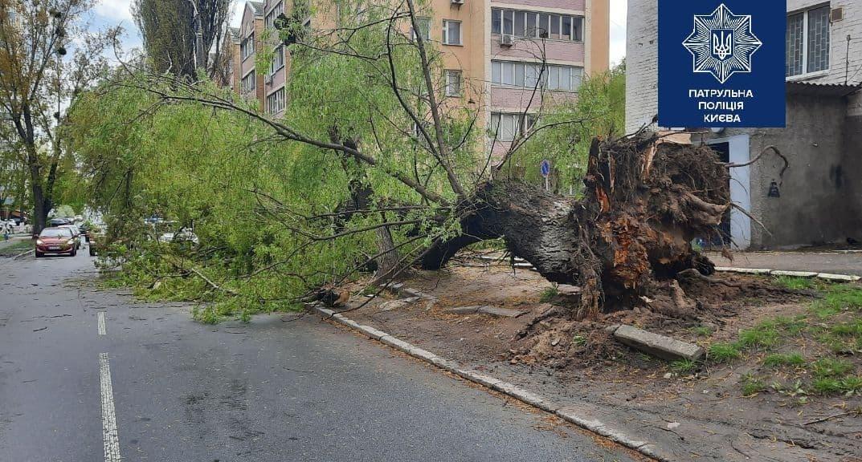 Вітер повалив кілька дерев у Києві
