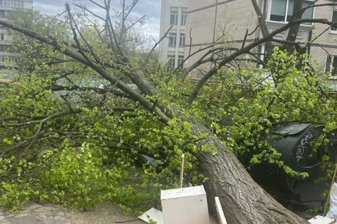 Вітер повалив кілька дерев у Києві, заблокувавши рух