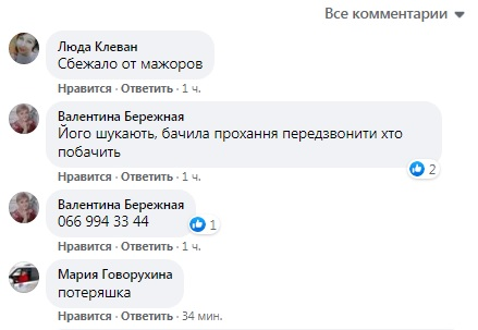 Бембі в Києві: біля метро помітили оленятко