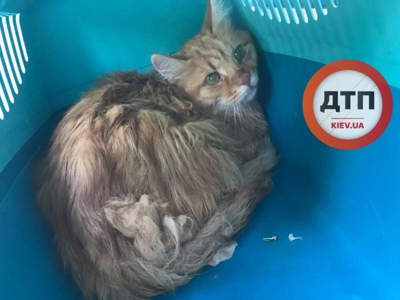 Жорстокіше тільки вбити: власники позбулися кота, кинувши в переносці в парку
