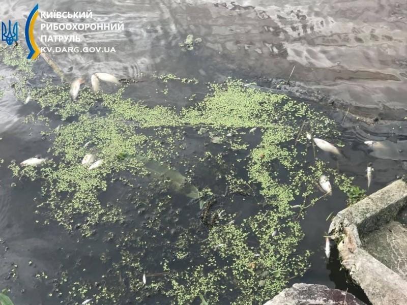 У річці під Києвом виловили три сотні мертвих рибин (ФОТО)