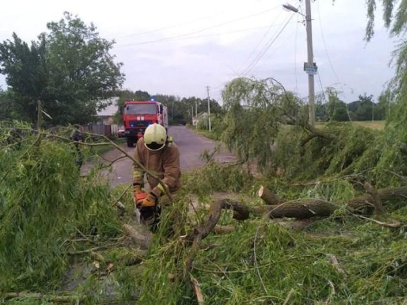 На Київщині через падіння дерев загинуло двоє людей