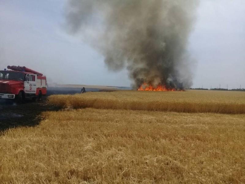 Під Києвом згоріло майже 10 гектарів поля (ФОТО)