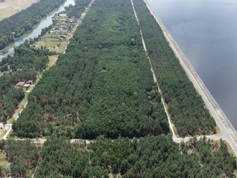 Зловмисники хотіли захопити ліс на елітних землях Київщини вартістю 100 млн грн