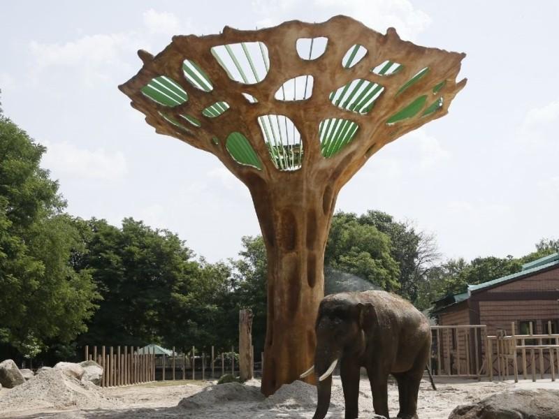 """Слоняча радість. У столичному зоопарку з'явився """"баобаб"""" (ВІДЕО)"""