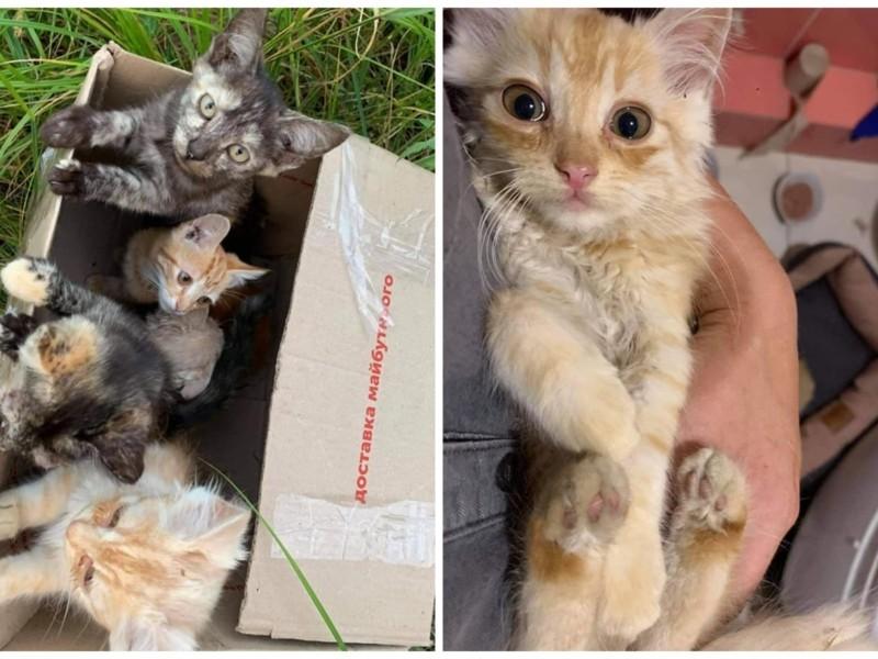 В Ірпіні біля церкви кинули коробку з кошенятами: п'ять пухнастиків хворі і зневоднені