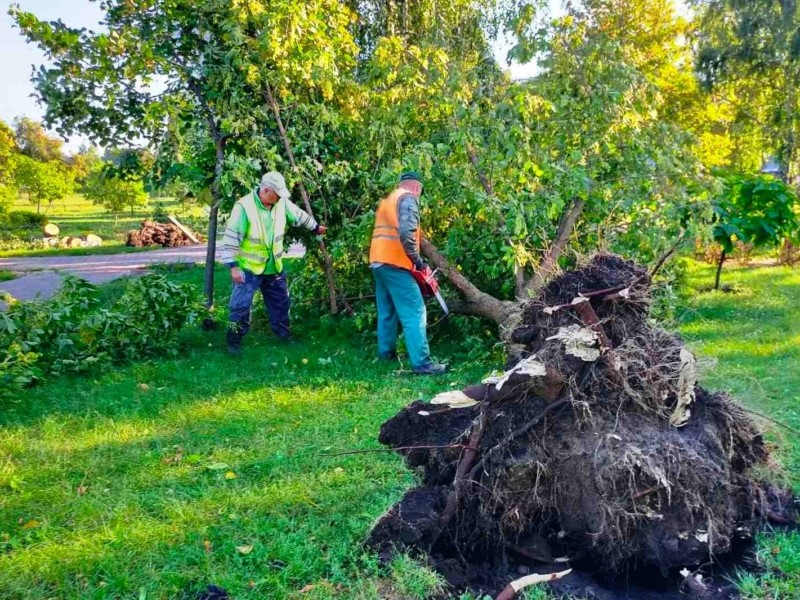 Шквали в Києві: зламано більше 350 дерев, багато в садочках та школах (ФОТО)