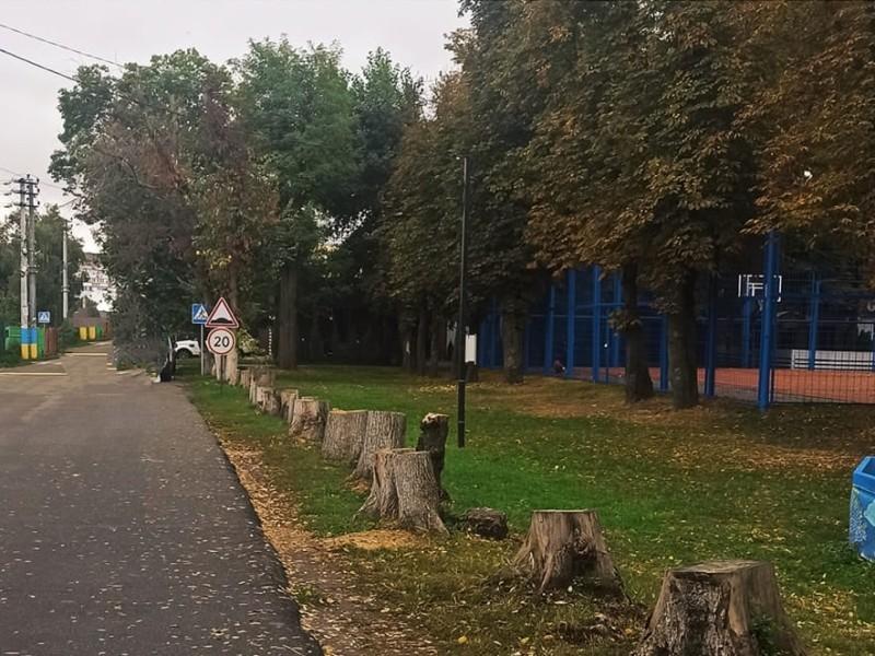 Толока навпаки. У центральному парку Борисполя з'явилась алея пеньків