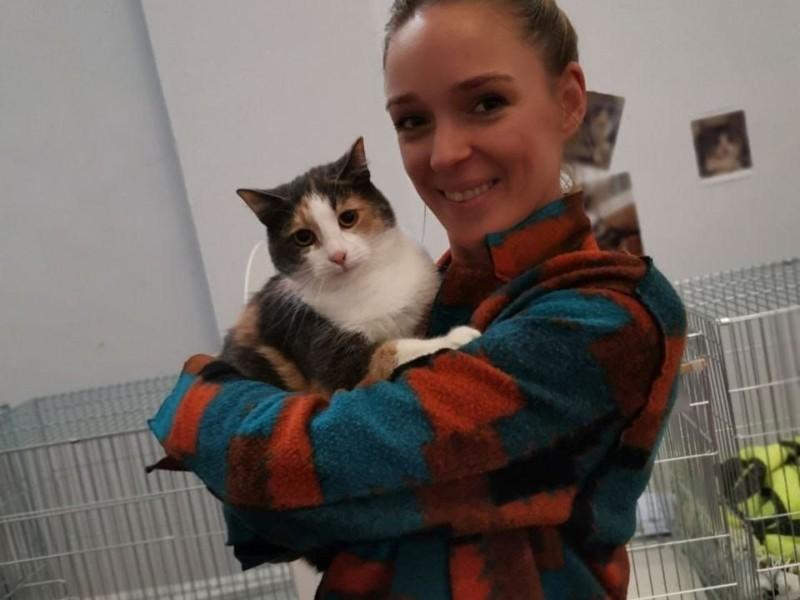 Кияни забрали понад 130 бездомних котів з благодійної виставки