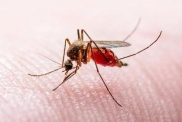 На Київщині у кількох людей виявили рідкісне захворювання. Вакцини від нього немає