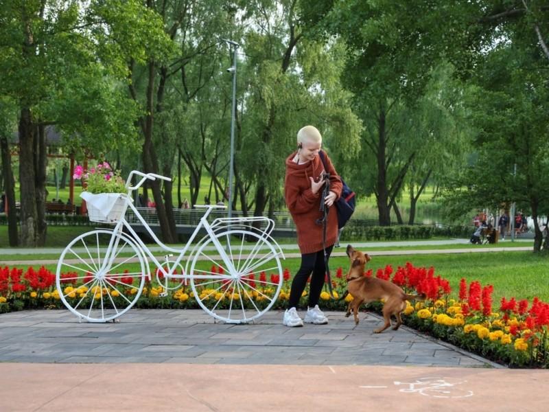 Гуляй, душа! У Дніпровському районі відкриють майданчик для вигулу собак