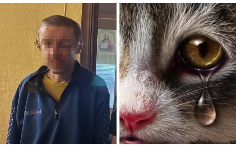 Стало відомо що буде з чоловіком, який викинув з 7 поверху кішку та чотирьох кошенят