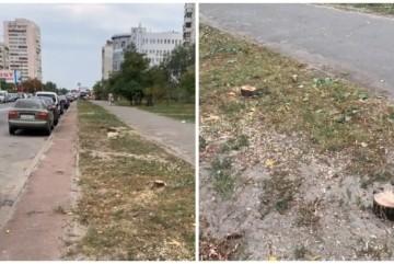 Варвари на Дарниці: на Руденко зрізали всі дерева вздовж проїзної частини