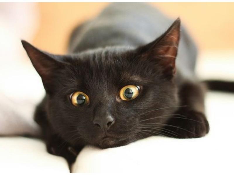 """У столиці зафільмували малого """"любителя"""" пухнастиків: гойдав кота з вікна багатоповерхівки (ВІДЕО)"""