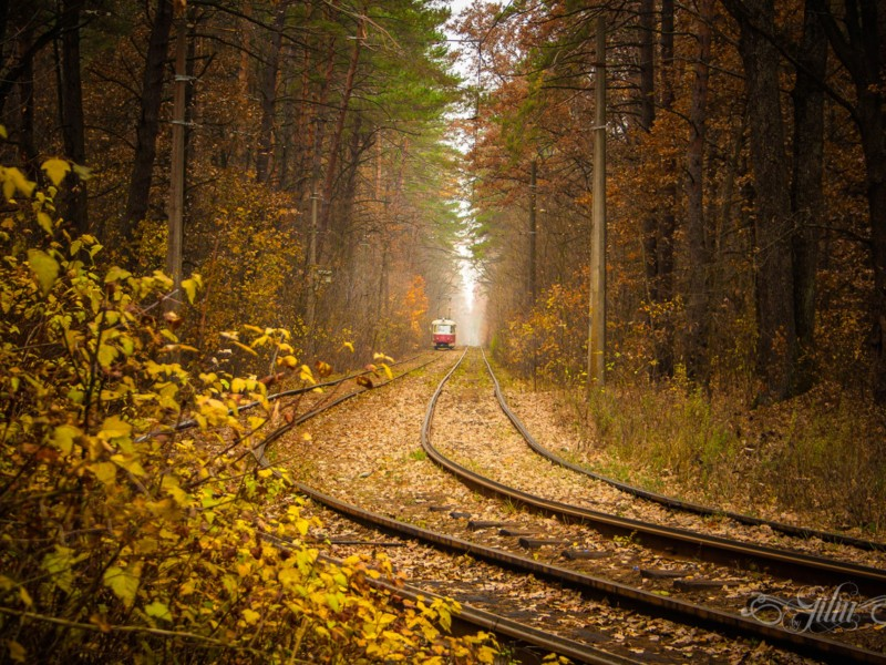Через ліс – у минуле. 10 фактів про улюблений трамвайний маршрут