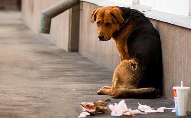 Киян просять допомогти порахувати безпритульних тварин у місті: деталі