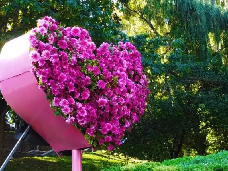 """На """"Співочому"""" співатиме й серце. Виставка хризантем на тему кохання цвіте та пахне"""