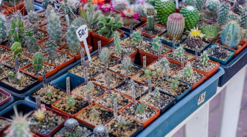 Дом природы приглашает на выставку кактусов и суперсуккулентов