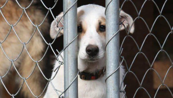 Полиция Киевской области открыла уголовное производство по факту издевательства над животным
