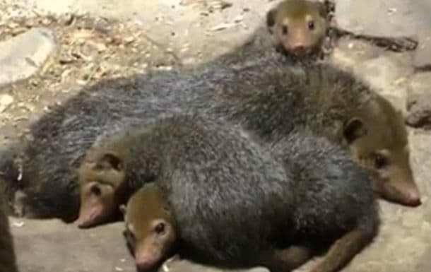 Зоопарк приглашает познакомиться с новыми обитателями Острова зверей
