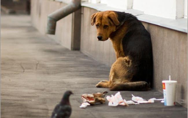 КГГА запускает программу регулирования численности бездомных животных