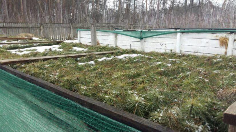 В Святошинском лесопарковом хозяйстве будет высажено 500 тысяч деревьев