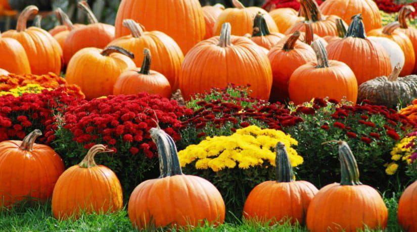 9 и 10 октября пройдут сезонные ярмарки
