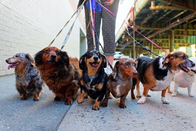 На Дарниці люди б'ють тривогу: на території ЖК хтось труїть собак