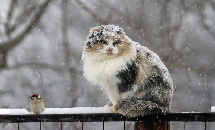 В Киеве ожидается мокрый снег и гололедица